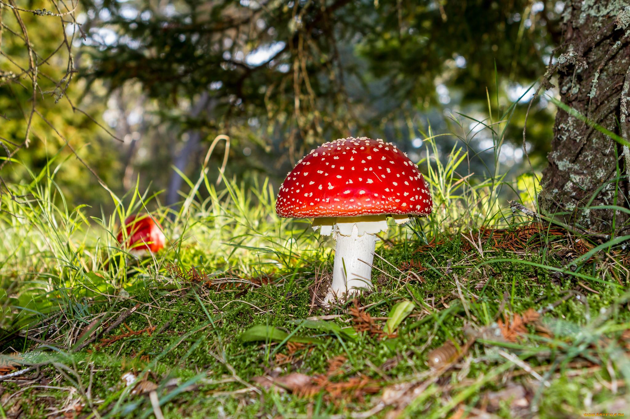 картинки о природе растениях и грибах лучших зубных